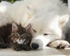 Les animaux de compagnie