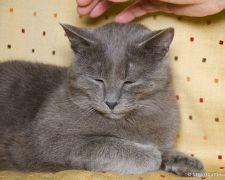 Vertus thérapeutiques animales
